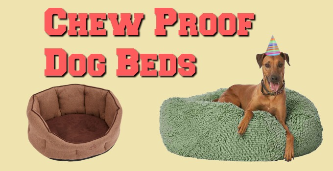 Chew-Proof-Dog-Beds