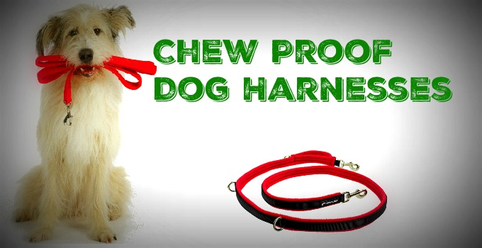 Chew-Proof-Dog-Harnesses