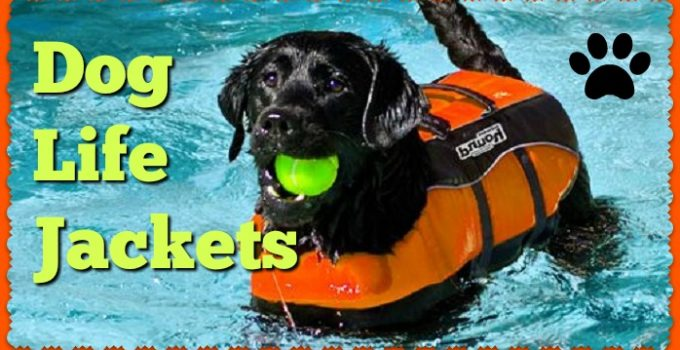 The Best Dog Life Jackets & Vests | Doggy Lifesavers by K9 & Outward Hound