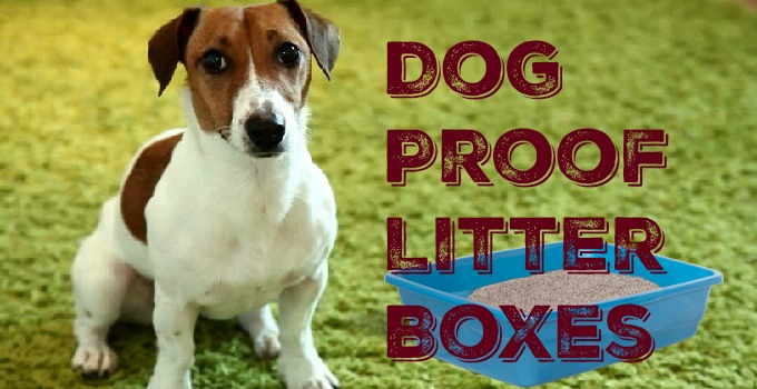 dog proof litter boxes