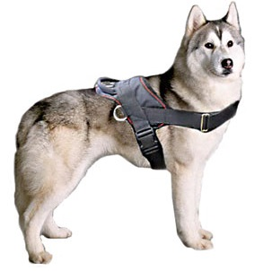 harnesses-for-huskys