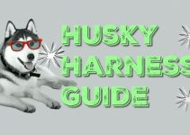 Sled Pulling & No Pull Harnesses For Huskies | Husky Harness Guide