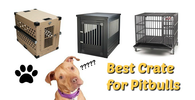 Best Crates For Pitbulls Doggytoggery