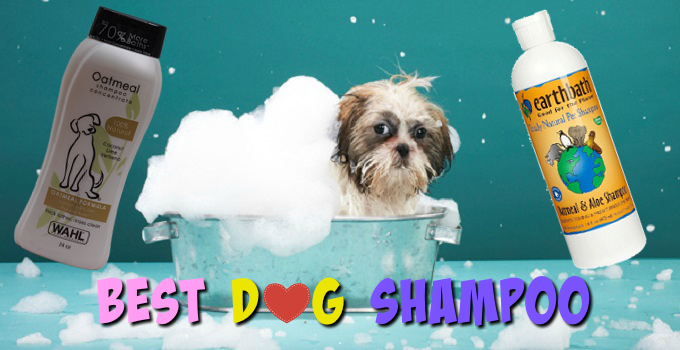 best-dog-shampoo