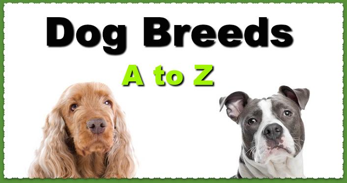Dog Breeds A to Z - DoggyToggery - photo#6