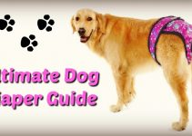 dog-diaper-guide