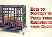 dogs-escaping-from-crate