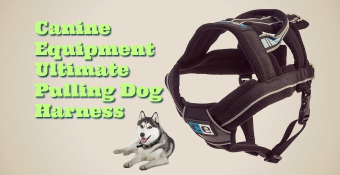 Canine-Equipment-Dog-Harness