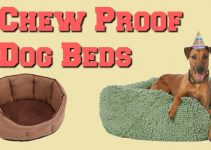 The Best Indestructible Chew Proof Dog Beds | Chew Resistant Tough Doggy Beds