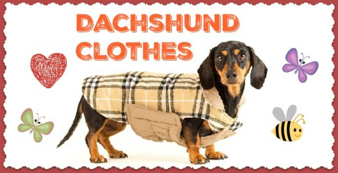 Dachshund-Clothes