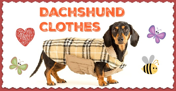 Clothes for Dachshund