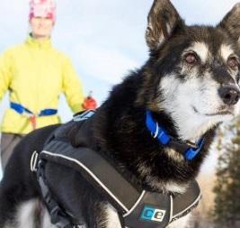 canine-dog-harness