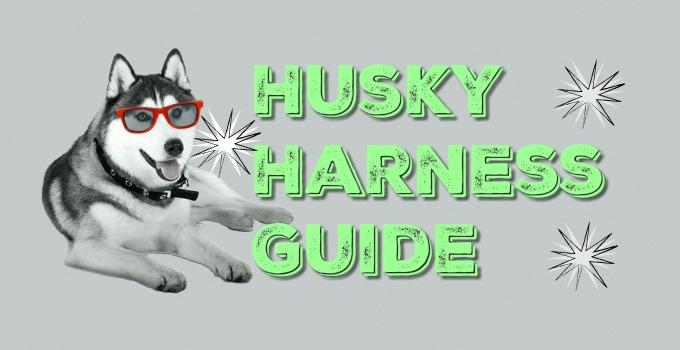 husky harness guide