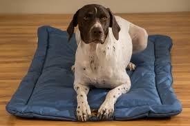k9-dog-bed