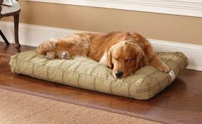 orvis-dog-bed