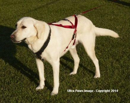 ultra-paws-dog-harness