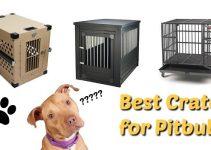 Best Crates for Pitbulls