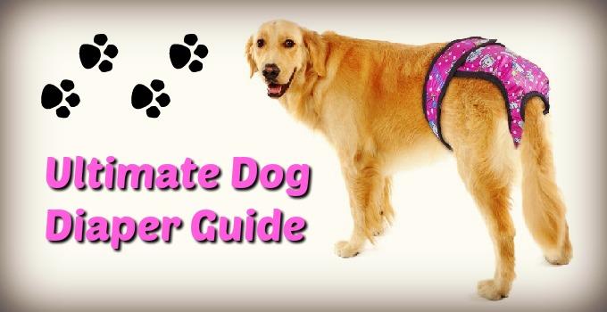 dog-diaper-guide