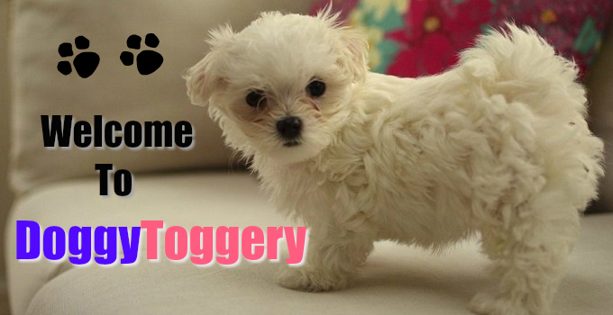 doggy-toggery-welcome
