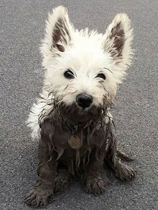 dog caked in mud