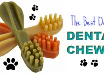 the-best-dog-dental-chews