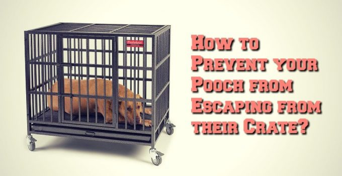 Preventing Your Dog Escaping From Their Crate or Kennel