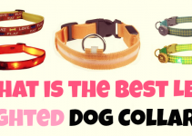What Are The Best LED Light Up Dog Collars?