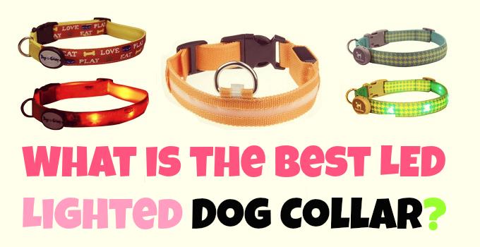 led-dog-collars-reviews