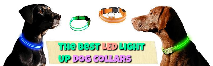 the-best-led-lightup-dog-collars